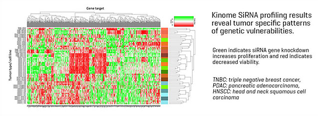 Kinome SiRNA profiling results reveal tumor specific patterns of genetic vulnerabilities