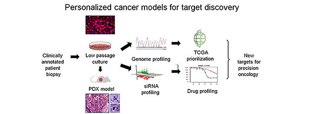 Personalized cancer models for target discovery