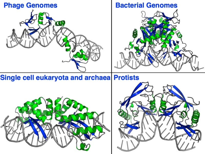 Homing Endonuclease Structures