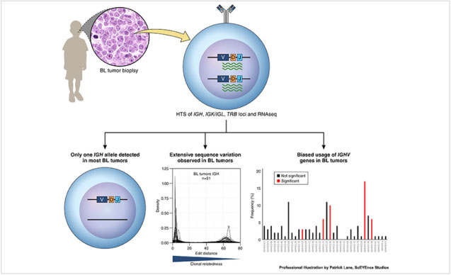 Graphical abstract of high-throughput sequencing of primary African Burkitt lymphoma